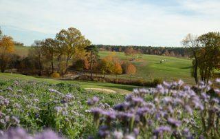 Golf-Club Herzogenaurach | News - Platz in der Natur