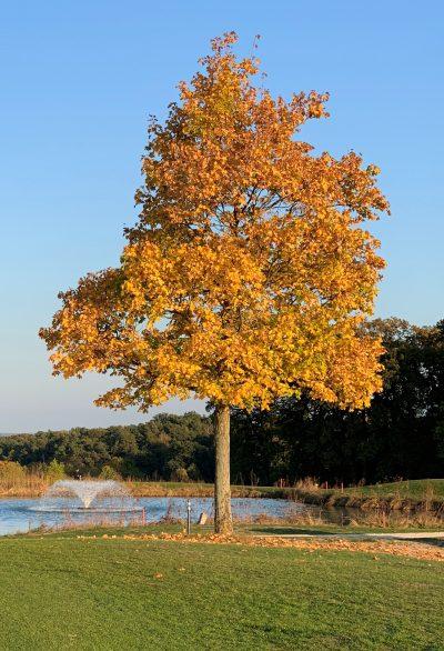 Golf-Club Herzogenaurach GuN Fotogalerie Herbst 050